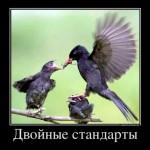 Двойные стандарты в ГИБДД Калининграда